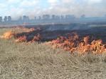 В Долгопрудном горело летное поле