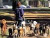 В Долгопрудном появится экспериментальная площадка для выгула собак