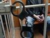 Задержан мужчина, подозреваемый в убийстве посетителя кафе в Долгопрудном