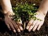 В Долгопрудном пройдет эко-акция «Наш лес. Посади свое дерево»