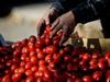 В Долгопрудном на складе нашли украинские помидоры